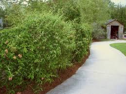 garden design garden design with trellis plant fence levels with