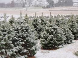 sawtooth farm tree farm council bluffs iowa omaha