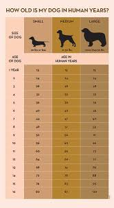 american eskimo dog growth chart how to calculate dog years to human years american kennel club
