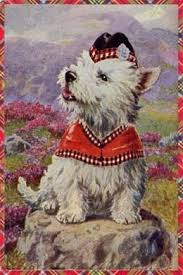 157 best westie images on dogs westies and west