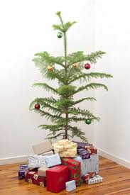 christmas real christmas trees how to choose the perfect tree