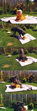 resume templates janitorial supervisor meme doge wallpaper meme please forgive me cute dog or satan dog either way sorry