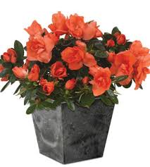 Sympathy Flowers And Gifts - order sympathy flowers and gifts funeral and memorial