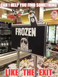 Grocery Meme - grumpy cat invests his meme fortune in a chain of grocery stores