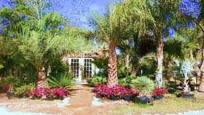 sylvester palm tree sale palm tree sales online home