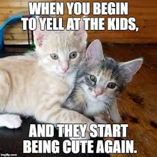 Sassy Cat Meme - 10 sassy cat memes that will crack you up for the week