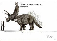 extinct u0027siberian unicorn u0027 lived humans fossil