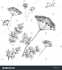 dill ink sketches stock illustration 333943886 shutterstock