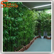 best 25 bamboo plants for sale ideas on growing