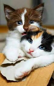 beautiful kittens they are beautiful kittens hope for good homes animals