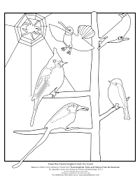 spectacular coloring pages connect the dots hummingbird page with
