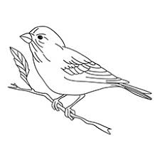 bird coloring pages for toddlers 20 free printable bird coloring pages online