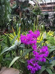 chihuly in the garden atlanta botanical garden u2013 southern doorway