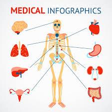 Anatomy Of Human Body Organs Body Organ Vectors Photos And Psd Files Free Download