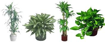 best indoor plants for low light best tall indoor plants small indoor house plants plants low light