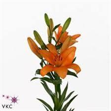 Wholesale Flowers Online Buy Lily La Wholesale Flowers Online Wedding Flowers Triangle