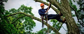tree u0026 lawn care jobs arborist careers savatree