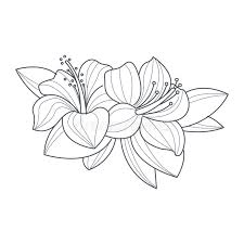 coloring pictures of hibiscus flowers hibiscus flower monochrome drawing for coloring book stock vector
