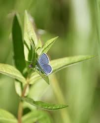 Blue And Green Butterfly - blue butterfly free pictures on pixabay