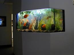 Fish Home Decor Decorations Unusual Fish Tank Decorations With Wooden Frame And