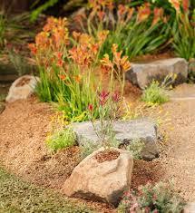 60 best native garden inspiration images on pinterest native