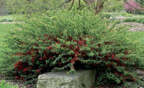 Top Flowering Shrubs - shrubs for slopes fine gardening