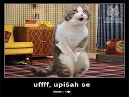 I Should Buy A Boat Meme Generator - best i should buy a boat cat meme generator imgflip s imgflip