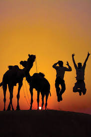 thar desert animals 776 best верблюд images on pinterest nature camels and deserts