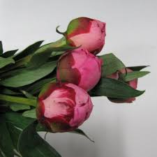 wholesale peonies bulk discount flowers buying peonies for weddings