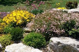 Big Rock Garden Landscaping Ideas With Big Rocks Rock Garden With Pink And Yellow