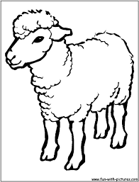 sheep outline drawing coloring sheep cartoon images funny