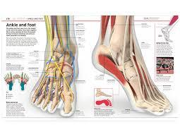 150 M To Feet Human Body Dk 9781465462398 Amazon Com Books