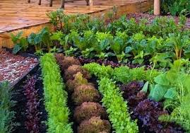 Small Vegetable Garden Ideas Pictures Planning A Small Vegetable Garden Ghanadverts Club