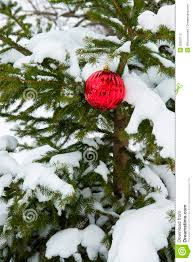 live real christmas tree snow single red ornament decoration