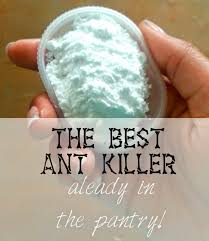 the long six the best ant killer already in the pantry