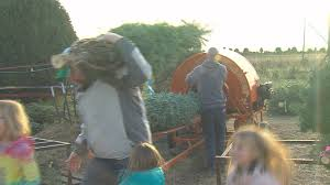 tree farm business picks up for holidays wandtv com