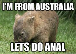 Wombat Memes - i m from australia lets do anal rude wombat quickmeme