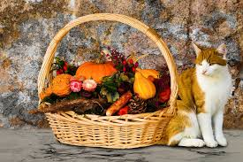 thanksgiving pet safety independence veterinary clinic