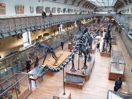 chambre des metier rodez chambre des metiers rodez chic grands dinosaures de muséum national