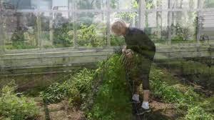how to plan vegetable garden video how to plant a vegetable garden martha stewart