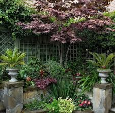 tall trees for small gardens cori u0026matt garden