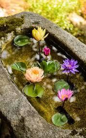 express o japanese flower garden japanese flowers flowers