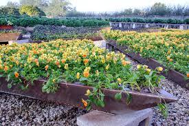 Botanical Garden Internship Heritage Garden Viola Pyramids My Chicago Botanic Garden