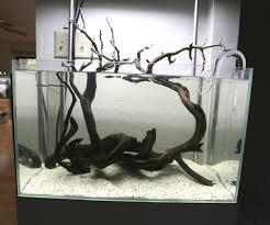 aquarium design exle ada 60p non co2 no excel either for 046 zebra plecos the planted