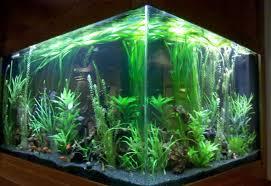 Aquarium Room Divider Clayton Aquariums Overlake Hospital Aquariums For Privacy