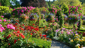 our perennial flowers shrubs and other garden plants collection