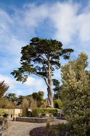 What Are Botanical Gardens Arboretum Golden Gate Park Garden Plants Things To Do In San