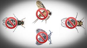 Tiny Flies In Kitchen And Bathroom How To Kill Fruit Flies Sewer Flies Or Drain Flies In Your Home