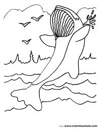 belly whale free killer coloring pages colouring pictures orca