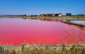 Pink Lake Lake Atanasovsko The Bizarre Pink Lake In Burgas Bulgaria